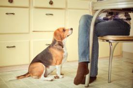 5 Φαγητά για να Μοιραστείτε με το Σκύλο σας!