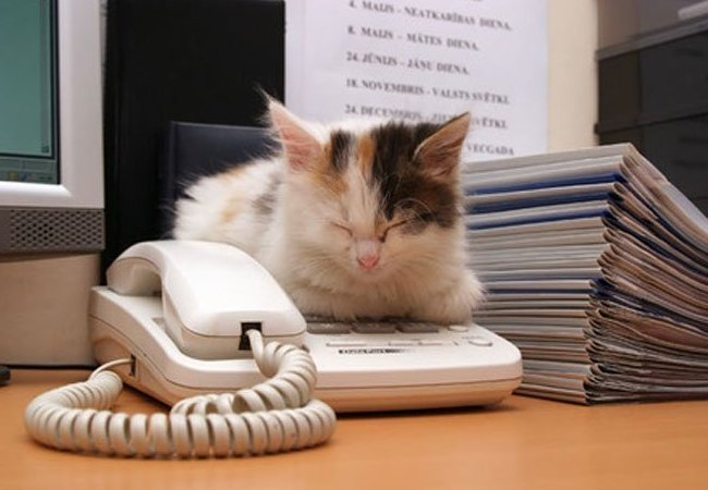 cat-at-the-office.jpg