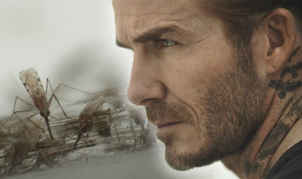 david-beckham-under-attack-by-10-000-mosquitoes-as-he-helps-fight-against-malaria-915258.jpg