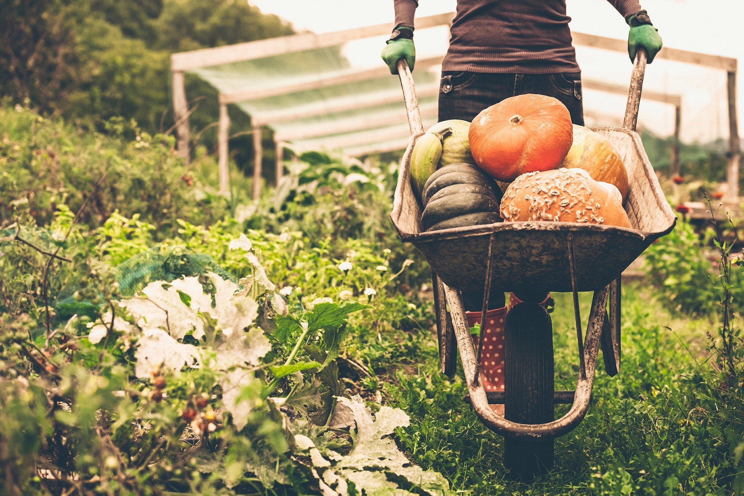 Προστατεύουν τα βιολογικά τρόφιμα από τον καρκίνο;