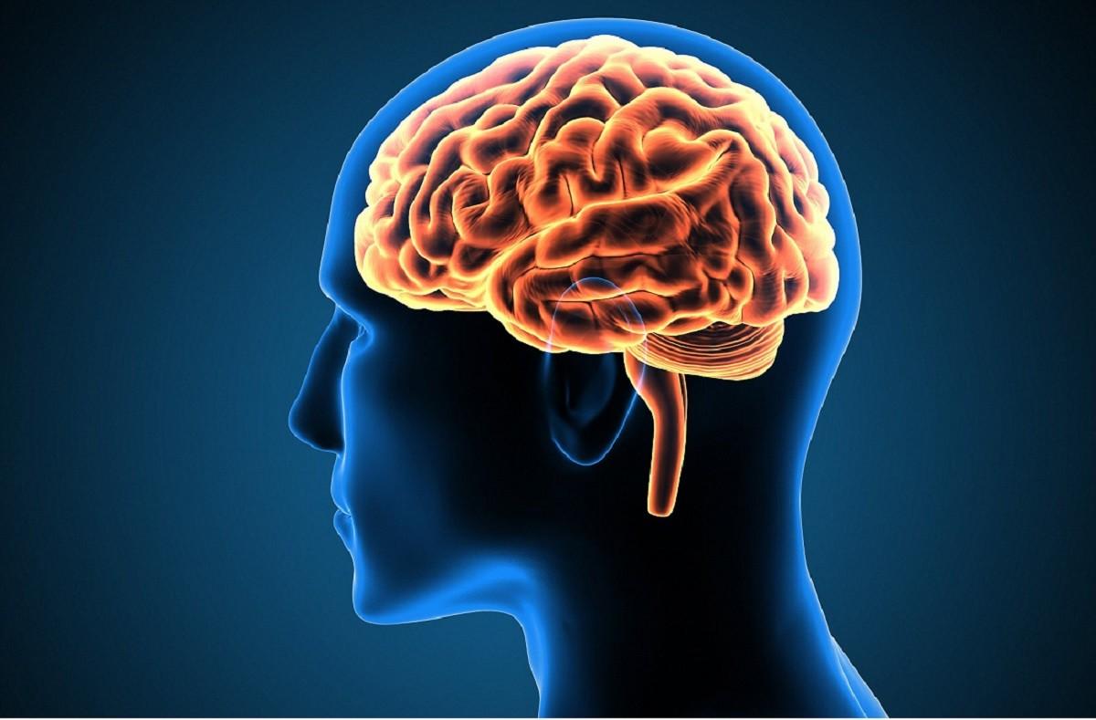 γράφημα που δείχνει πως είναι ο ανθρώπινος εγκέφαλος