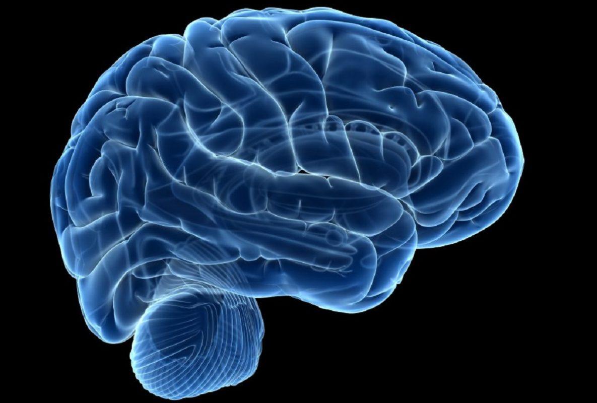 γραφική αναπαράσταση του ανθρώπινου εγκεφάλου